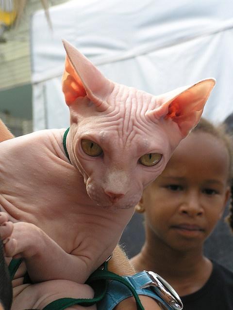 sphynx-cat-fun-11