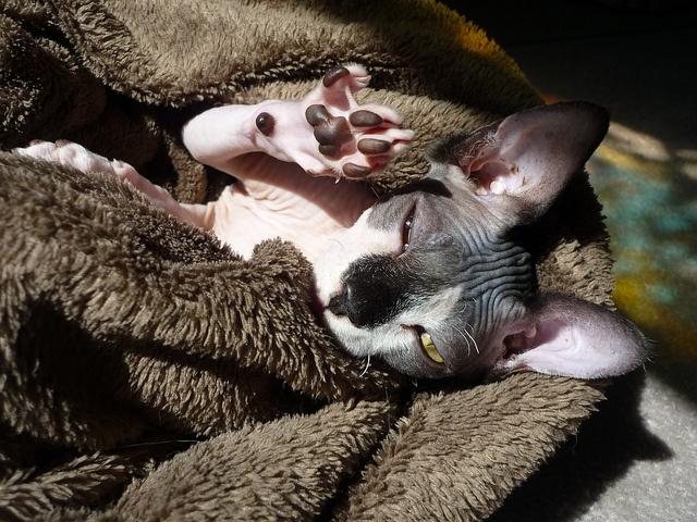 sphynx-cat-fun-6