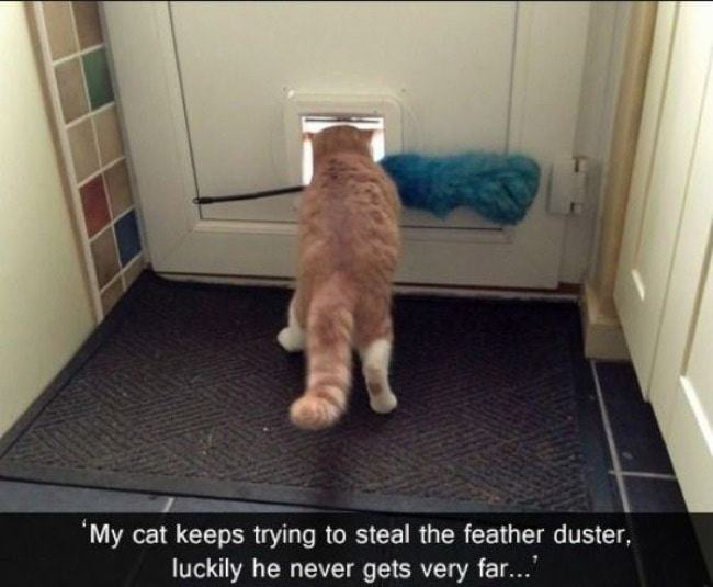 Cat-master-theives-30