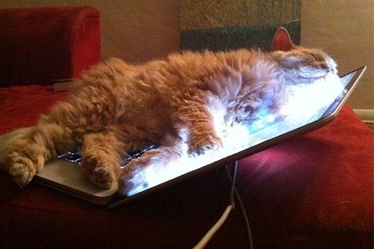 cat-truths-06