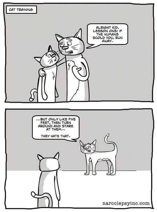 life-w-cats-17