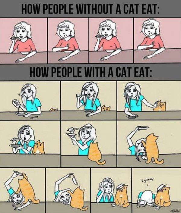 life-w-cats-27