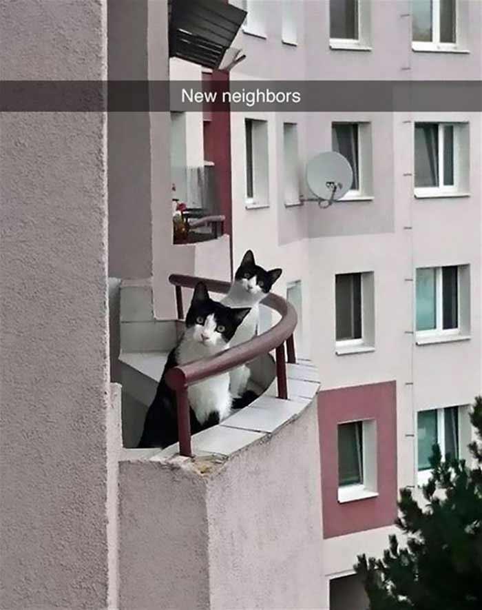 snapchat-cat-06