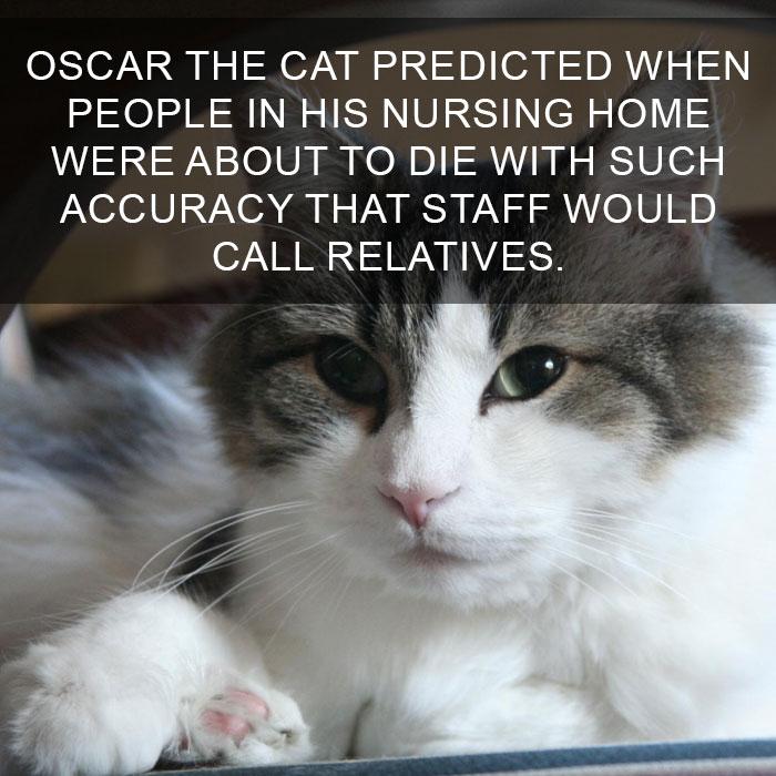 Cat-Facts-13
