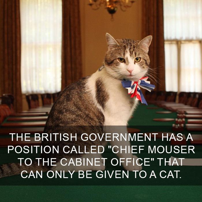 Cat-Facts-14