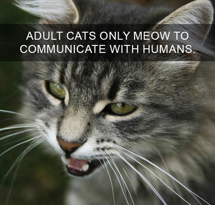 Cat-Facts-16