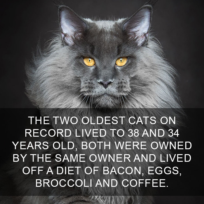 Cat-Facts-17