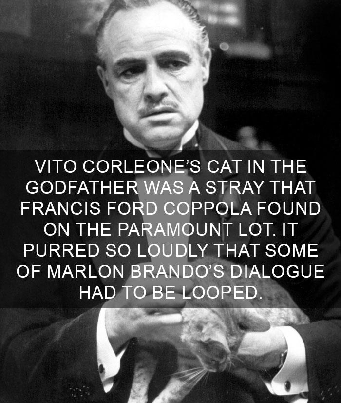 Cat-Facts-20