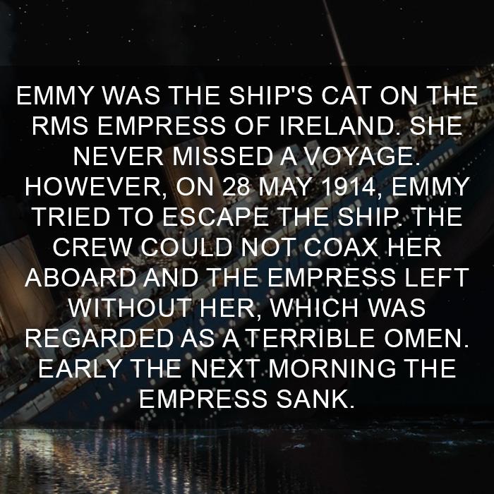 Cat-Facts-22