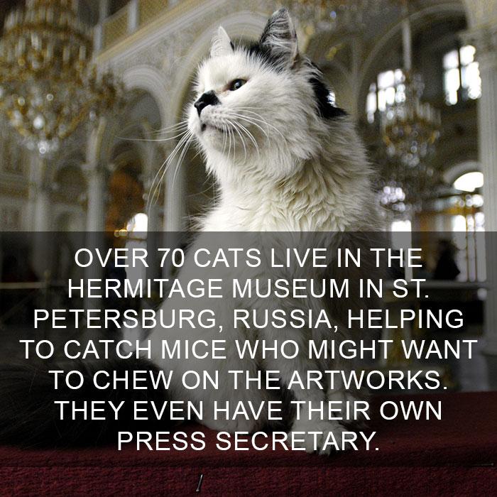 Cat-Facts-23