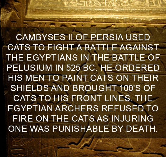 Cat-Facts-24