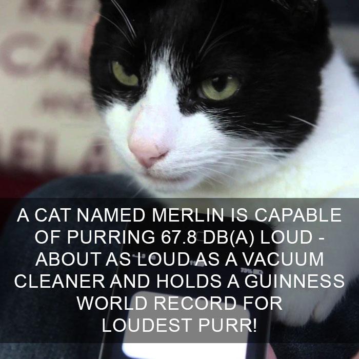Cat-Facts-25