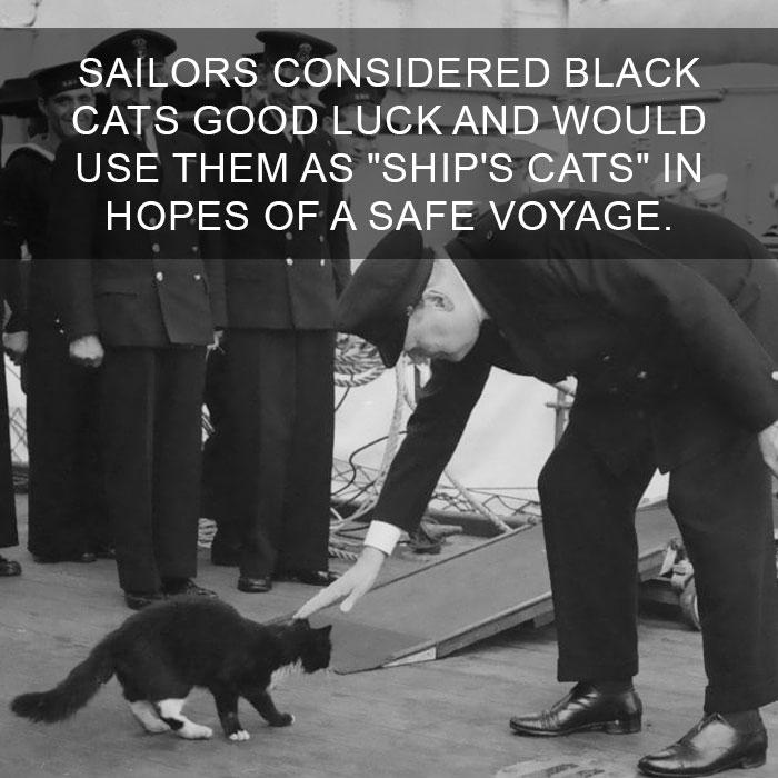Cat-Facts-28