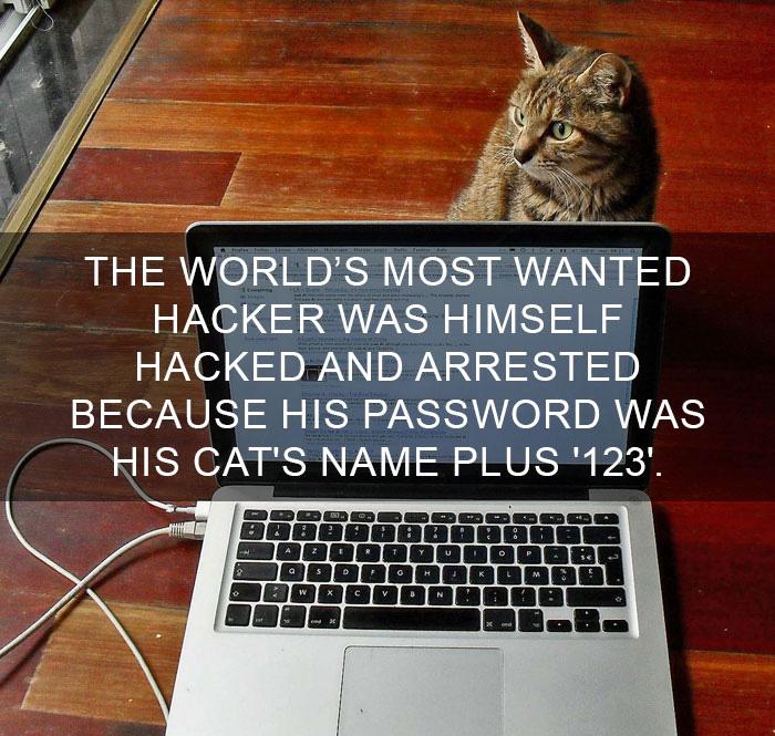 Cat-Facts-29