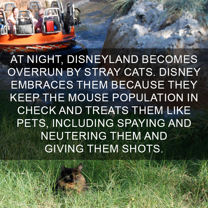 Cat-Facts-3