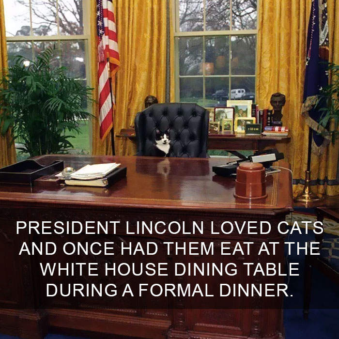 Cat-Facts-30