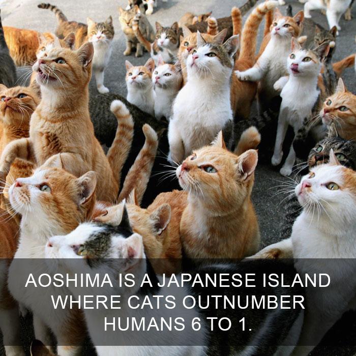 Cat-Facts-31