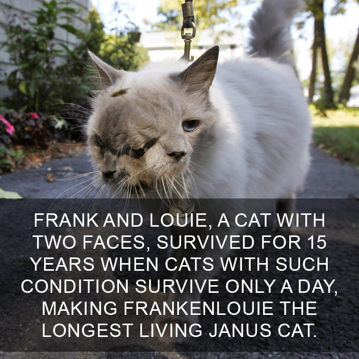 Cat-Facts-33