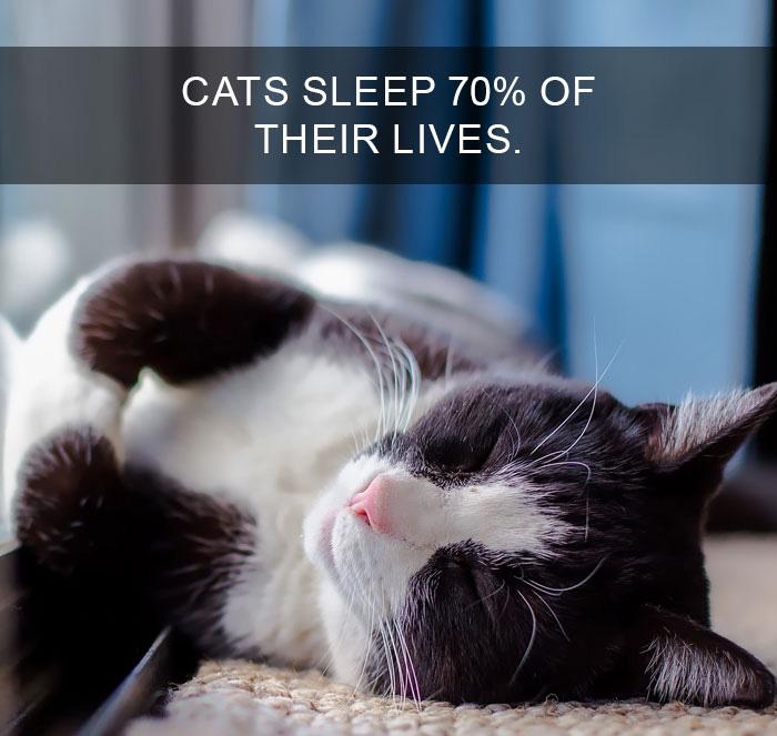 Cat-Facts-34