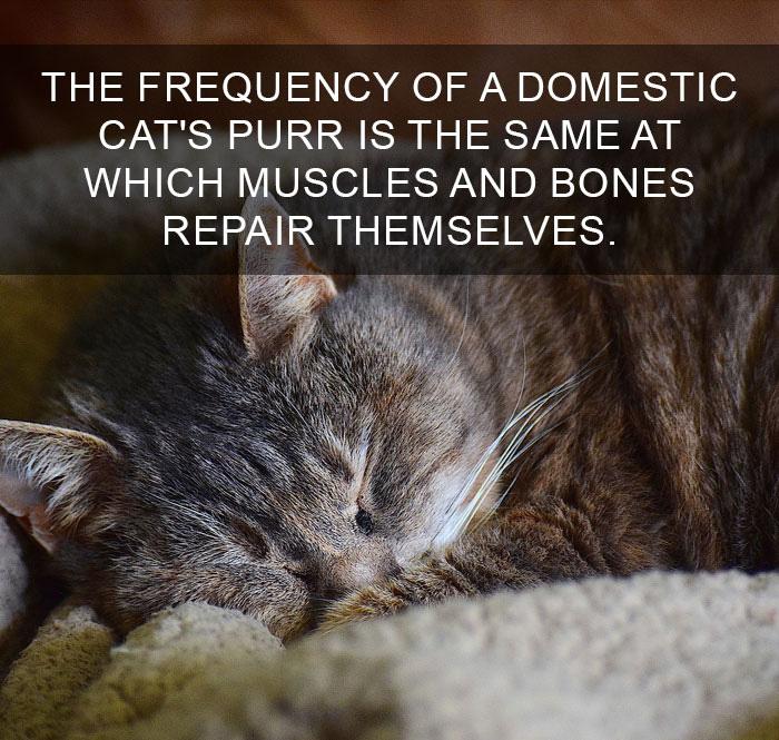 Cat-Facts-35