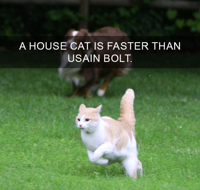 Cat-Facts-36