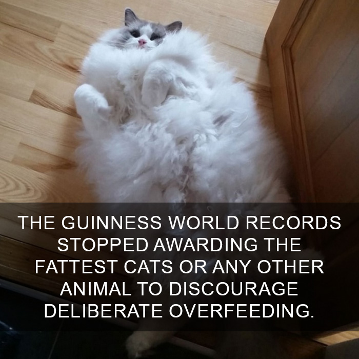 Cat-Facts-4