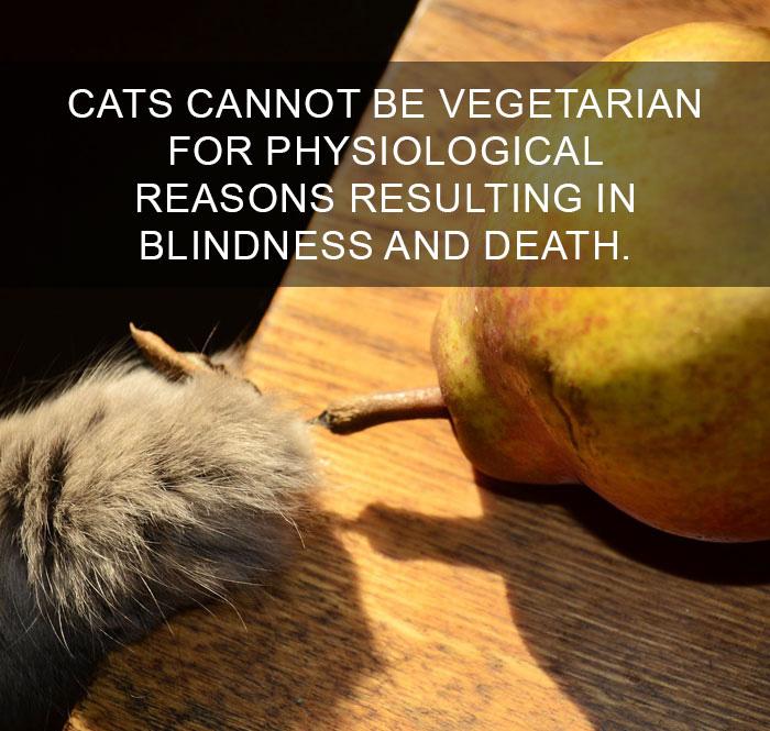 Cat-Facts-40