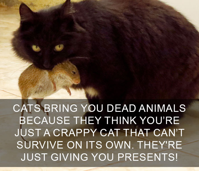 Cat-Facts-5