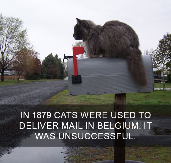 Cat-Facts-9