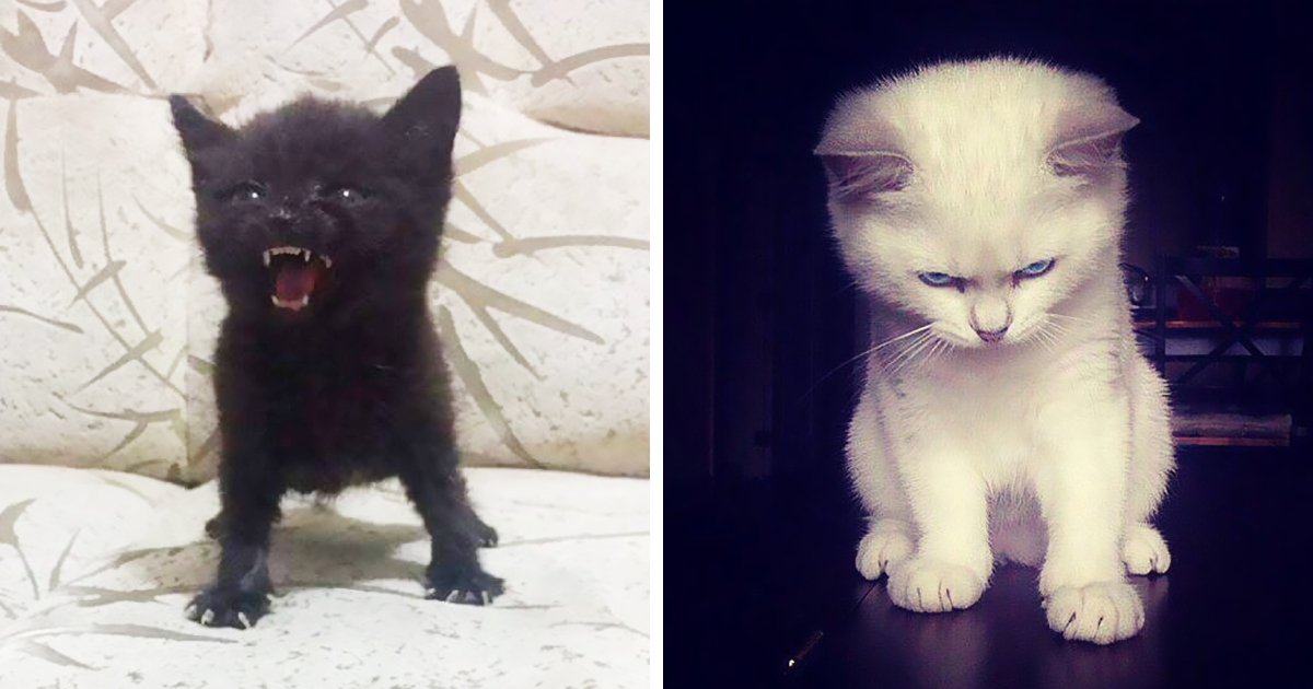 10+ Angry Kittens Who Demand To Be Taken Seriously Right