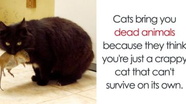 Featured-Cat-Facts