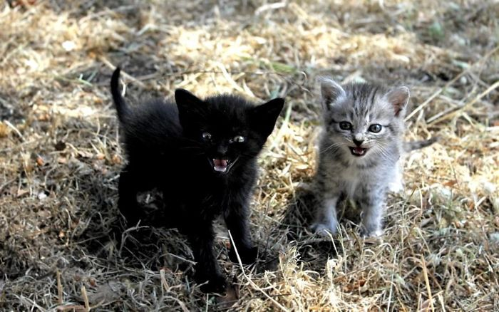 angry-kittens-12
