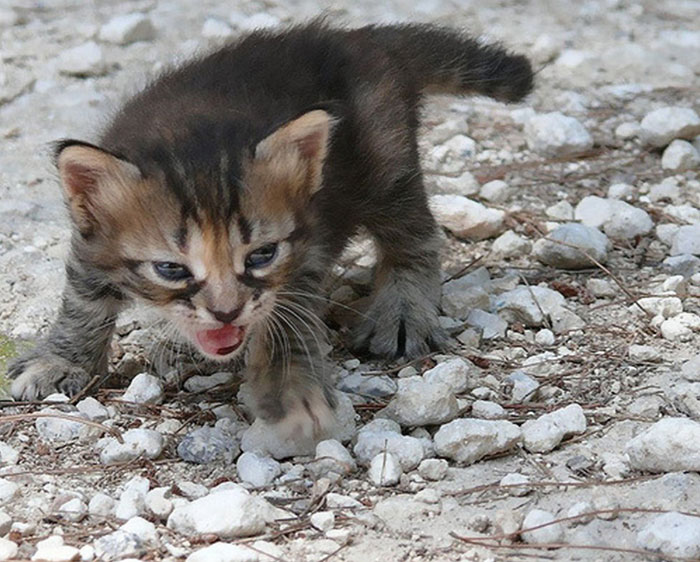angry-kittens-13