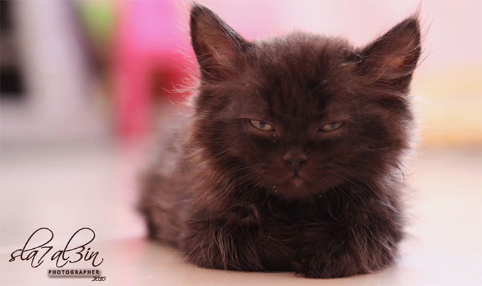 angry-kittens-15