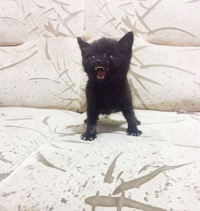 angry-kittens-2