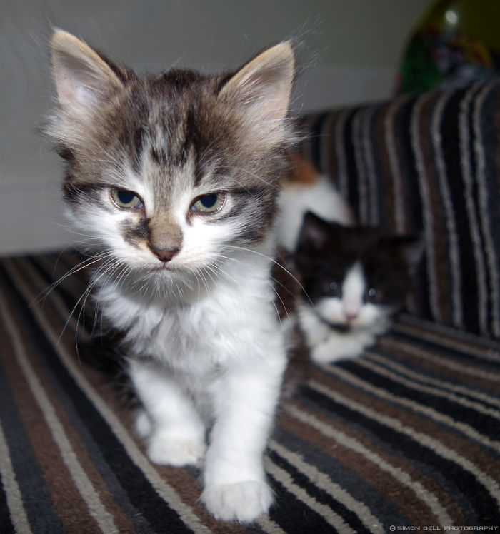 angry-kittens-20