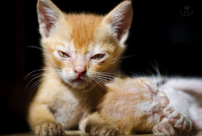 angry-kittens-23