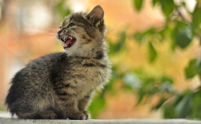 angry-kittens-25