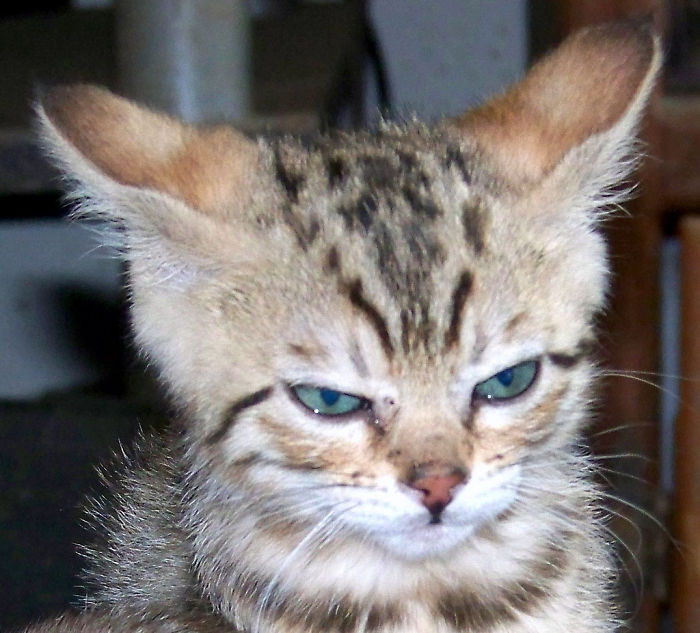 angry-kittens-26
