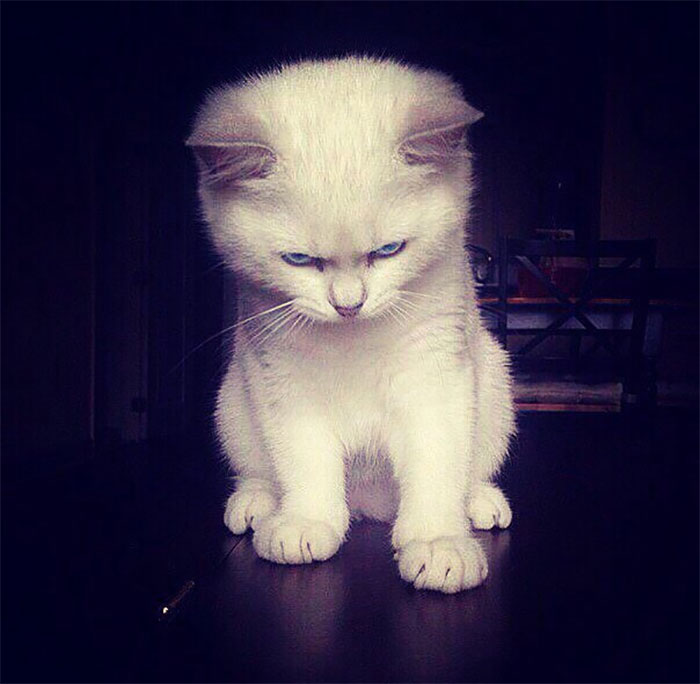 angry-kittens-3