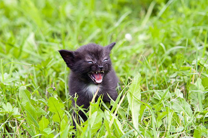 angry-kittens-9