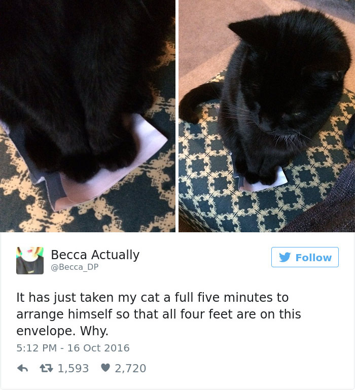 funniest-cat-tweets-2016-1