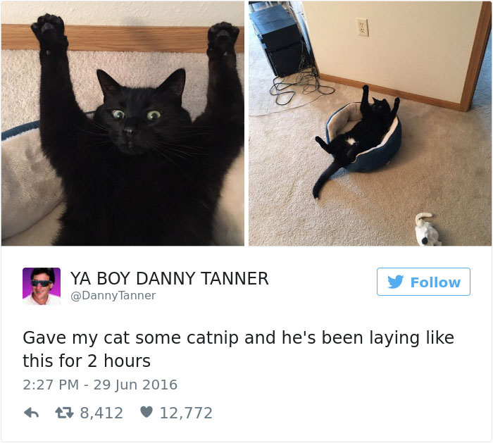 funniest-cat-tweets-2016-12