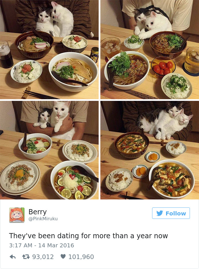 funniest-cat-tweets-2016-17