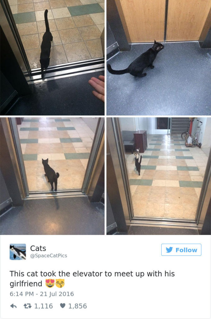 funniest-cat-tweets-2016-18