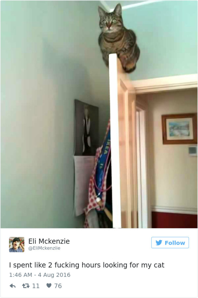 funniest-cat-tweets-2016-2
