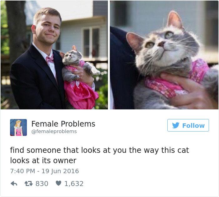 funniest-cat-tweets-2016-24