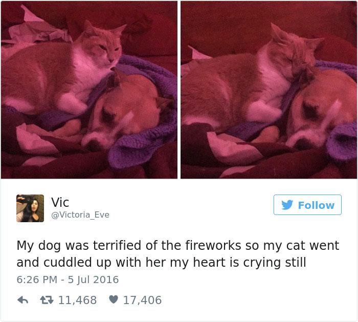 funniest-cat-tweets-2016-4