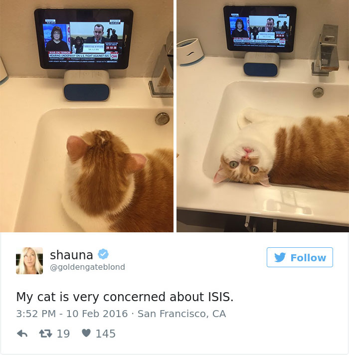 funniest-cat-tweets-2016-48