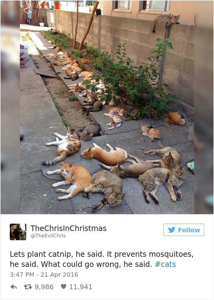 funniest-cat-tweets-2016-5